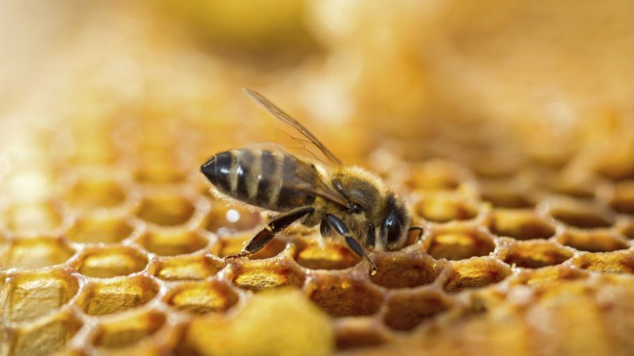 Résultats de recherche d'images pour «abeille»